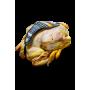 poulet fermier avec abats