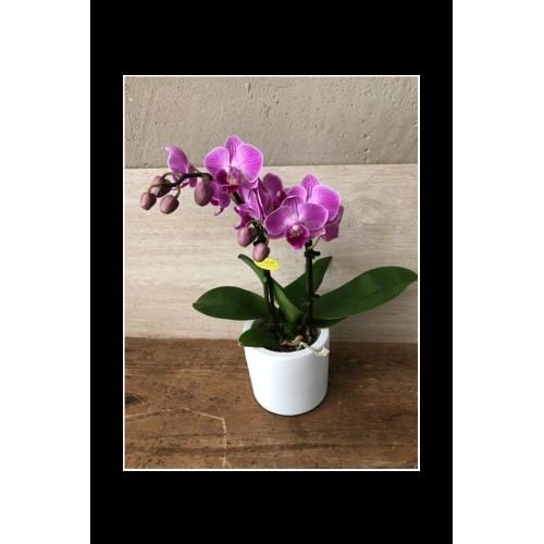 Mini-orchidée rose 2 tiges + cache-pot