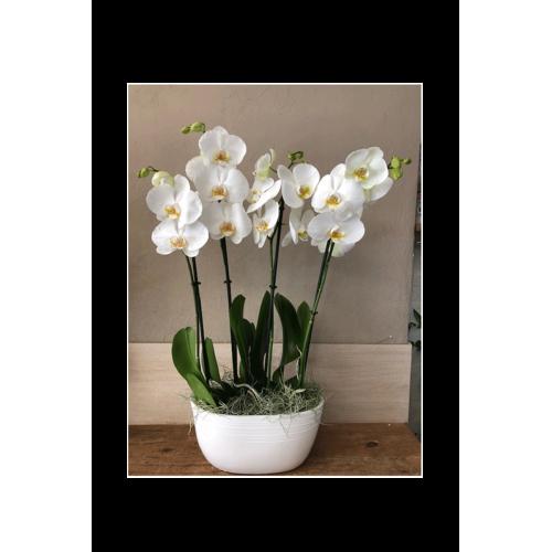 Coupe 2 orchidées blanches